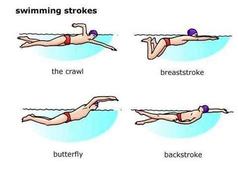 Descriptive essay of swimming essays